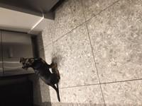 Ceppo di Gre Cemento-R 59,3x59,3 VC6003 € 69,95 m²-2